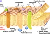 Penjelasan Sel Sebagai Unit Terkecil Kehidupan dan Bioproses Pada Sel