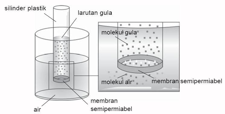 Tekanan Osmosis (Pengertian, Rumus, Proses Terjadi, dan Contohnya)