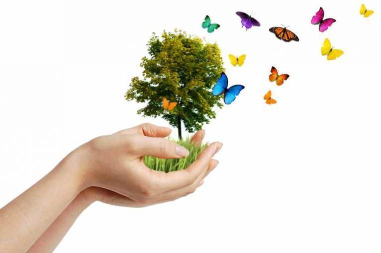 Kumpulan Puisi Keindahan Alam dan Lingkungan Terbaru