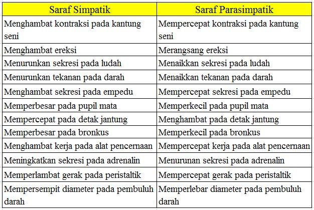 Pengertian Saraf Simpatik dan Parasimpatik Beserta Perbedaan