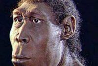 Ciri Ciri Pithecanthropus Mojokertensis Beserta Sejarahnya