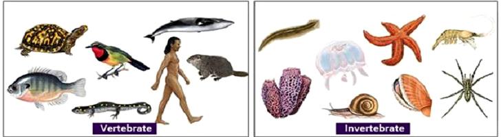 Jenis Jenis Hewan Vertebrata dan Invertebrata