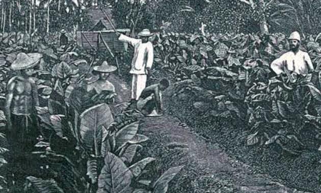 Sistem Tanam Paksa di Indonesia