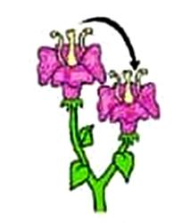 Pengertian Dan Contoh Penyerbukan Tetangga Pada Bunga Tumbuhan Anto Tunggal