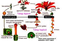 Ciri Ciri Angiospermae Beserta Pengertian, Klasifikasi dan Contoh